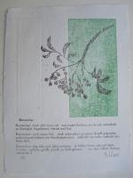 http://w-hielscher.de/files/gimgs/th-74_ebereschen.jpg